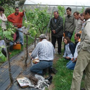 servicios-vocarraje-viticultores-000